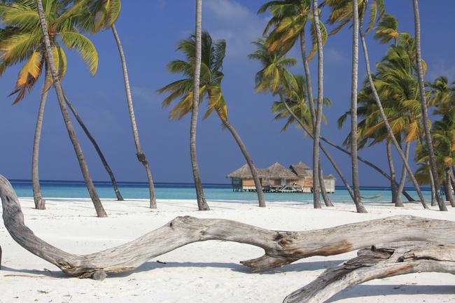 Сонева Гили (Мальдивы)