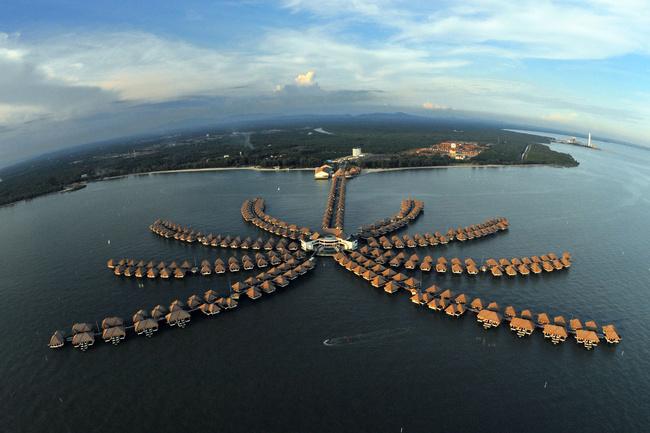 Palmier d'or (Malaisie)