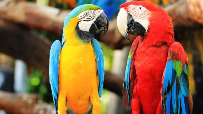 Burung-burung yang paling eksotik di dunia