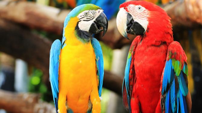 Världens mest exotiska fåglar
