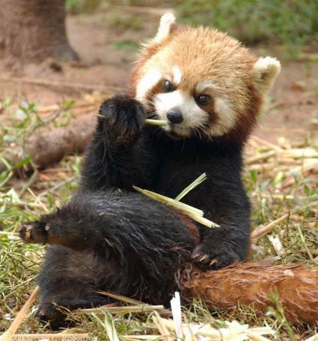 Ce bambou est bon