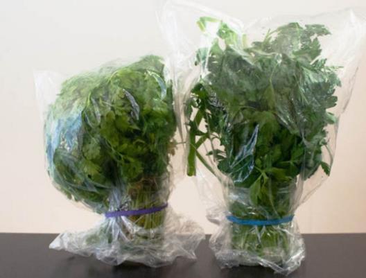Salsa e outras plantas aromáticas