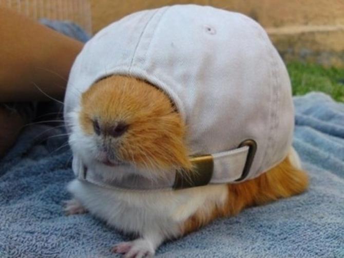 Adakah saya meletakkan topi terbalik?