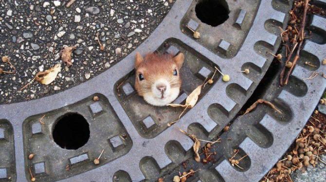 Haiwan terperangkap dalam situasi yang tidak masuk akal