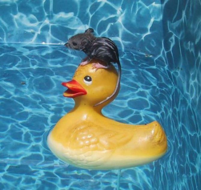 S'il te plait, ne bouge pas trop, je ne sais pas nager ...
