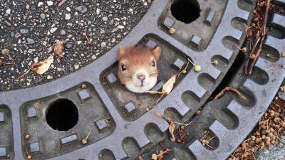 Tiere in lächerlichen Situationen gefangen