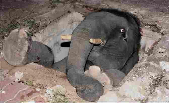 Un forat més gran que un elefant