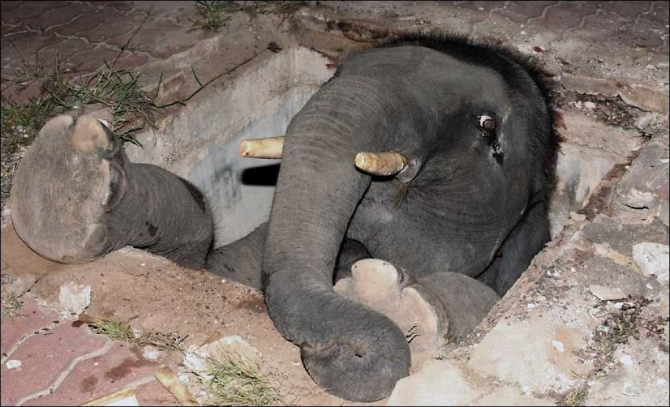 Un trou plus gros qu'un éléphant
