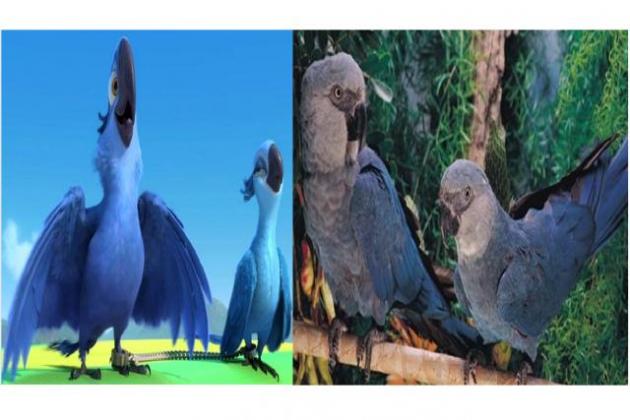 Blu y Perla (Cyanopsitta spixii)