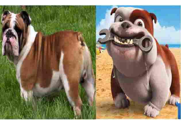 Luiz (Bulldogge)