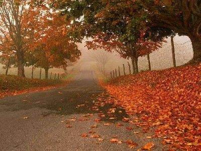 Осенняя песня весной