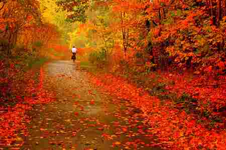 Autumn Poem
