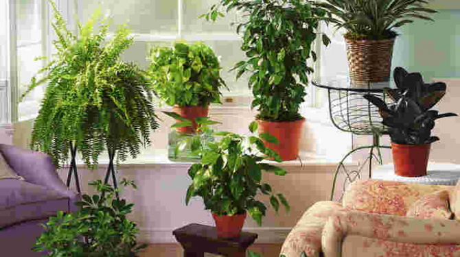 Air purifying plants for homes and offices