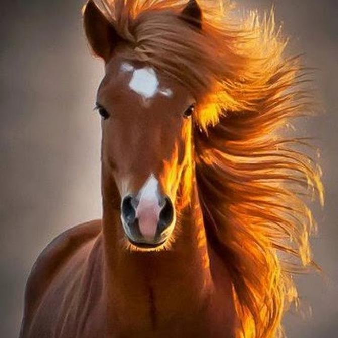 Amb la cabellera a el vent