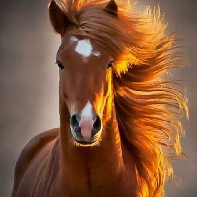 With the mane to the wind