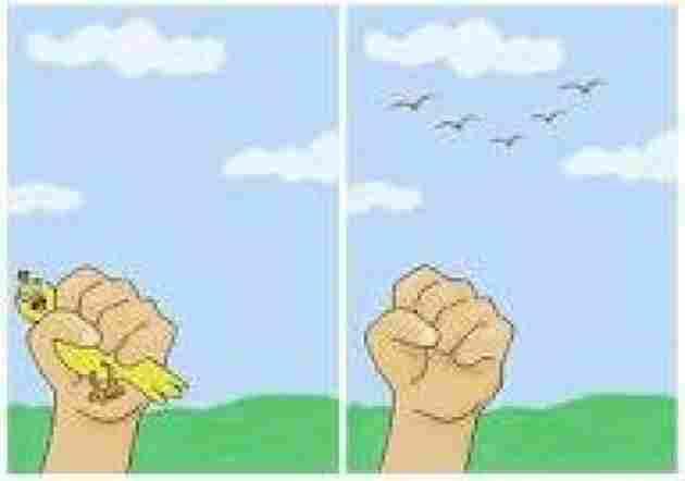 Better Bird In Hand, Than Hundreds Flying