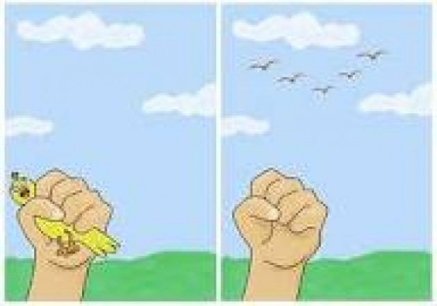 Pássaro melhor na mão do que centenas voando