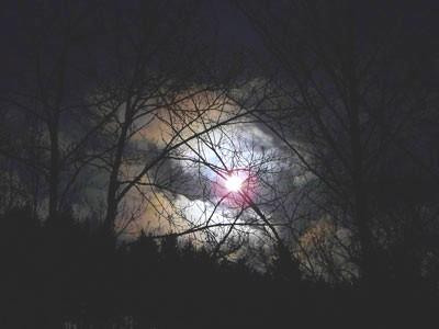 Nuit dans les bois