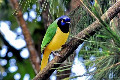 Oiseaux forestiers