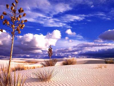 Vents du désert