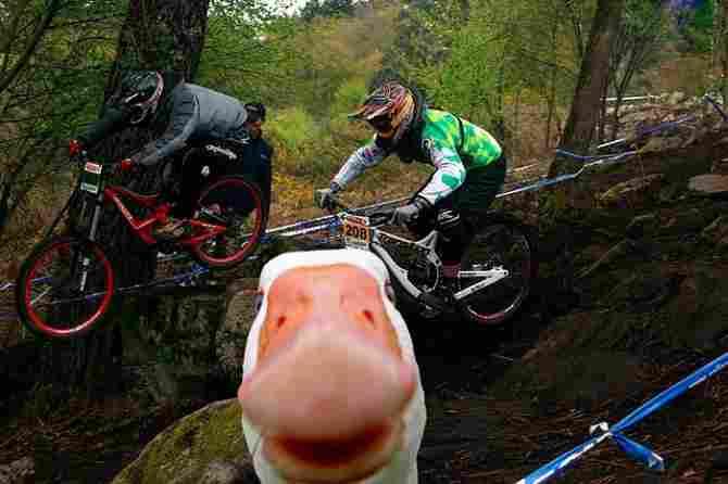 Report something cross 'ducky'