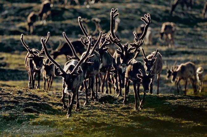 Национальный парк Вунтут