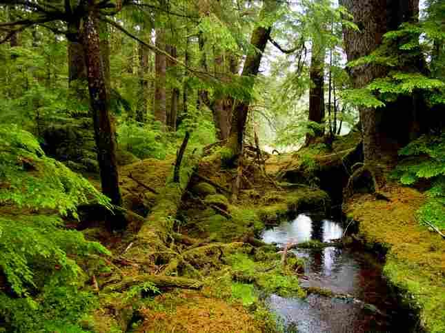 Gwaii Haanas National Park and Haida heritage site