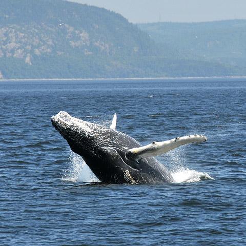 Saguenay-Saint-Laurent Национальный морской парк