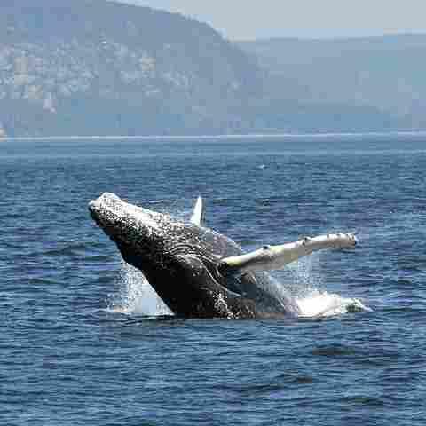 Saguenay-Saint-Laurent National Marine Park