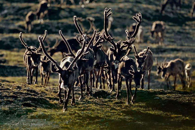 Vuntut National Park