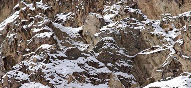 ユキヒョウまたはイルビス-中央アジア