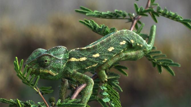 Los animales más expertos en técnicas de camuflaje (Cripsis)