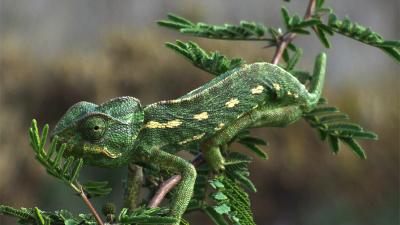 Os animais mais experientes em técnicas de camuflagem (Crypsis)