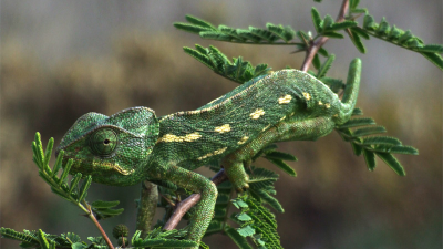 The most expert animals in camouflage techniques (Cripsis)