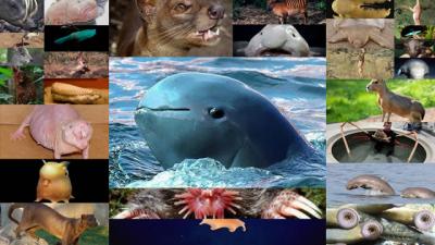 50 самых странных новых видов животных в мире