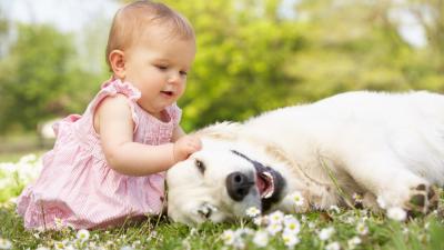 De bästa filmerna av spädbarn och deras husdjur