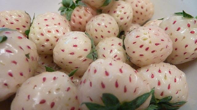 Pineberry