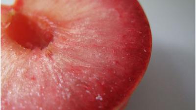 The most amazing hybrid fruits