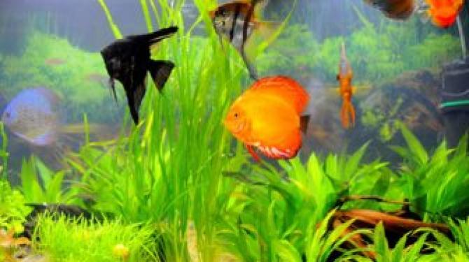 Лучшая тропическая пресноводная рыба