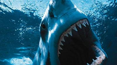 As melhores e mais arrepiantes imagens de tubarões
