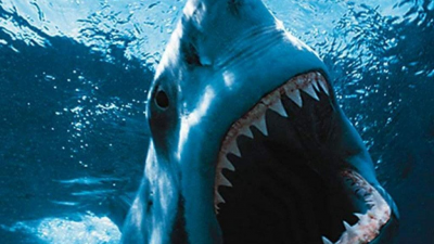 The best and most chilling shark images