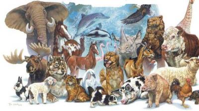 Представительные животные стран