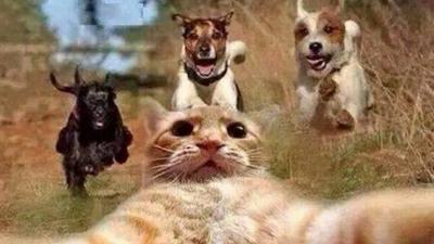 Cele mai extreme și periculoase selfie-uri