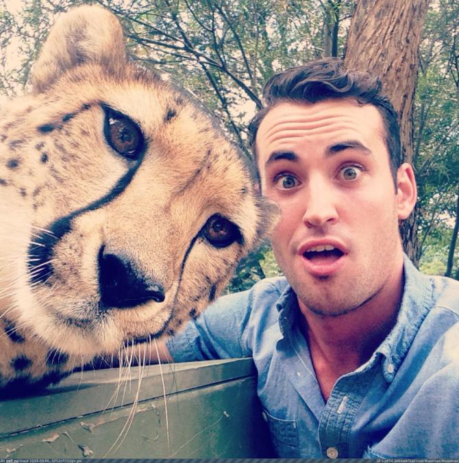 Selfie com um tigre