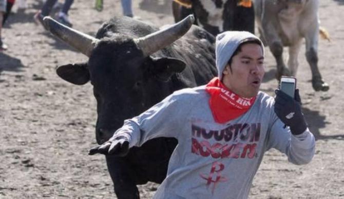 Selfie di hadapan lembu jantan