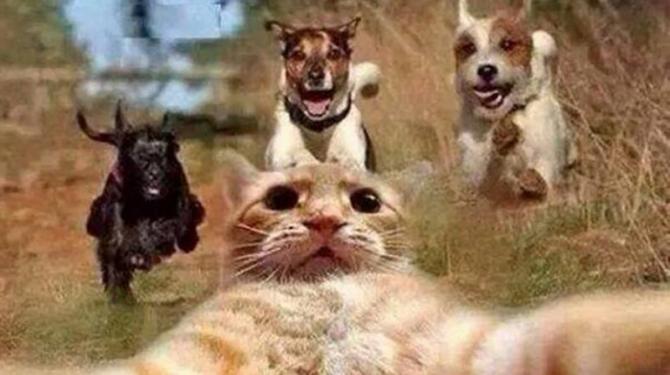 Selfies yang paling melampau dan berbahaya