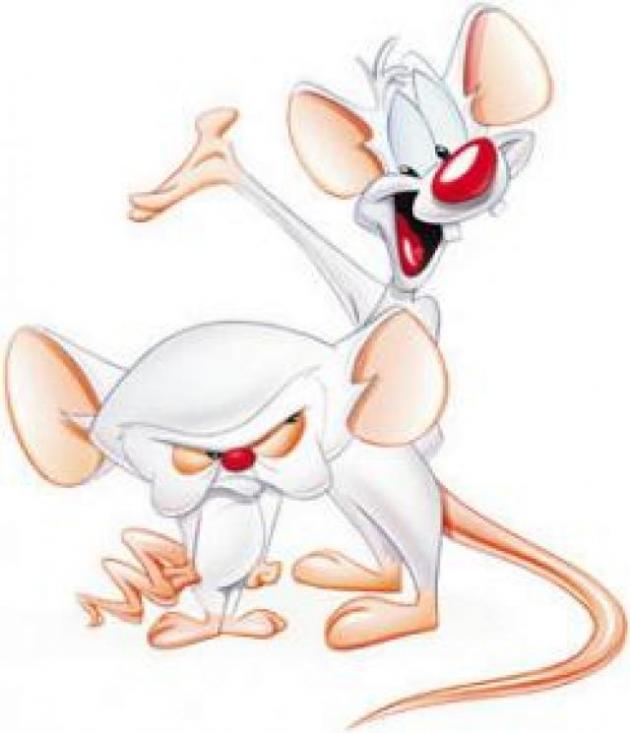 Pinky & Cerebroo