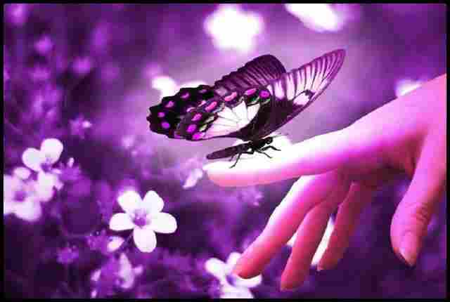 The message of the butterflies