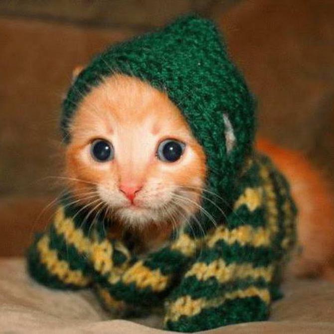 Als ik het koud heb ...