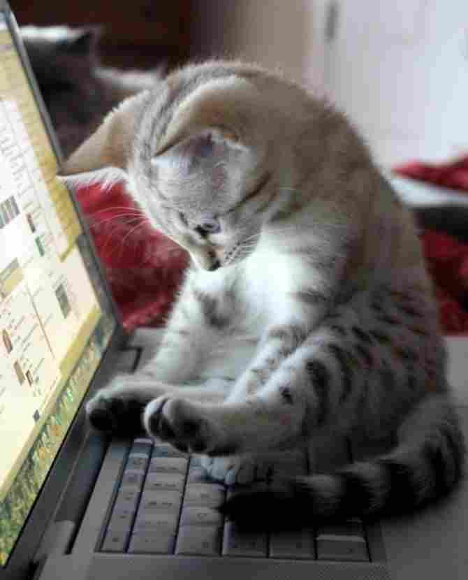 En Francia, me llaman 'Chat'. ¿A ver qué es un chat?